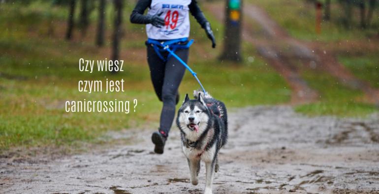 mężczyzna biegnący przez las z psem na uprzęży